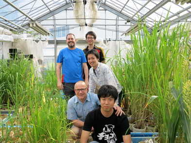 Rice submergence group at Nagoya University
