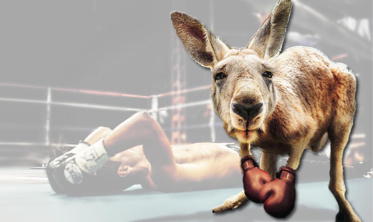 kangaroo knocks me outjpg